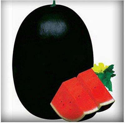 Mixtes rares Graines de pastèque chinois juteux fruits délicieux melon d'eau Plantes Bonsai pot pour jardin Décor 40 pcs/sac 4