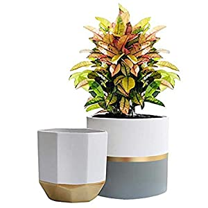 White Ceramic Flower Pot Garden Planters 6.7 + 5.4 Inch Indoor, Plant Containers with Gold and Grey Detailing