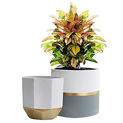 White Ceramic Flower Pot Garden Planters 6.7 + 5.4 Inch Indoor, Plant Containers with Gold and Grey Detailing Arizona