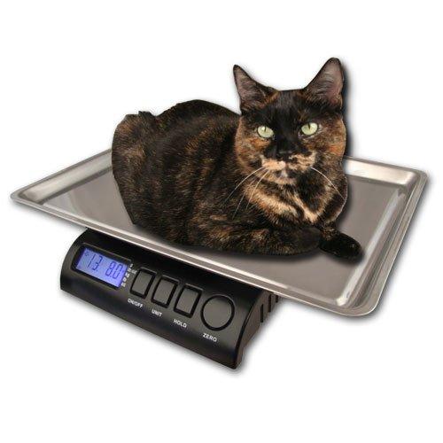 "ZIEIS | 30 Lb. Capacity | Medium Pet Series - Digital Cat Scale | Z30P-SST | BigTop (15"" x 10"" x 1"" ID) Stainless Steel Top | AC/DC Power | 0.1 Ounce Accuracy"