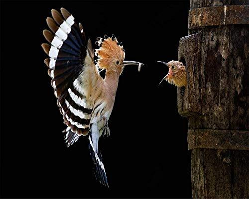 JFZJFZ Frameloos schilderij op nummer-kit DIY olieverfschilderij tekening De Wiedehopf Vogel vliegende kuiken geschenkkits voorgedrukt canvas kunstdecoratie 40cmX50cm