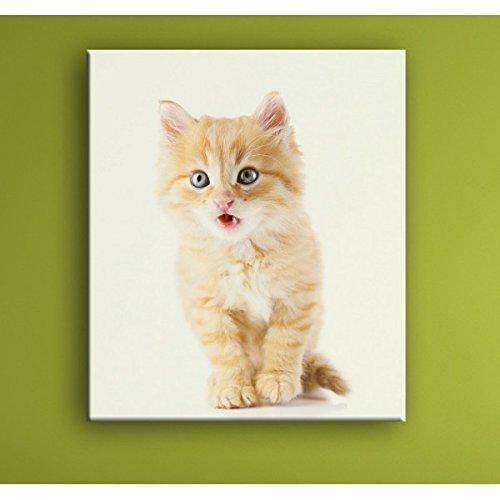 Deco Soon cuadro el gato