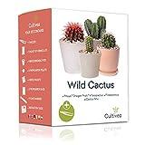 """Cultivea Mini - Kit di cactus pronto da coltivare - Semi francesi 100% ecologici - Fai giardinaggio e decora - Idea regalo (Pitaya""""Dragon Fruit"""", Ferocactus, Pilosocereus e Cactus in Mix)"""