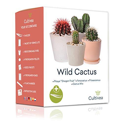 Cultivea Mini - Kit Cactus Listo para Cultivar - Semillas Francesas 100% Ecológicas - Jardinería y decoración - Ideal para Regalar (Pitaya'Dragon Fruit', Ferocactus, Pilosocereus y Cactus Mix)
