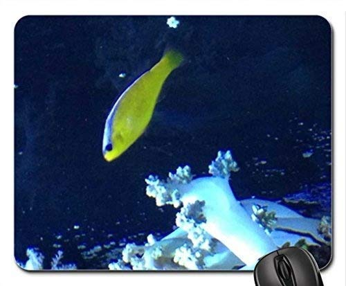 Fisch-themenorientiertes Gaming-Mauspad, Seattle Aquarium-Mauspad, Mousepad