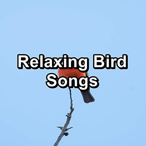 Birdsong Garden Bird Songs For Babies