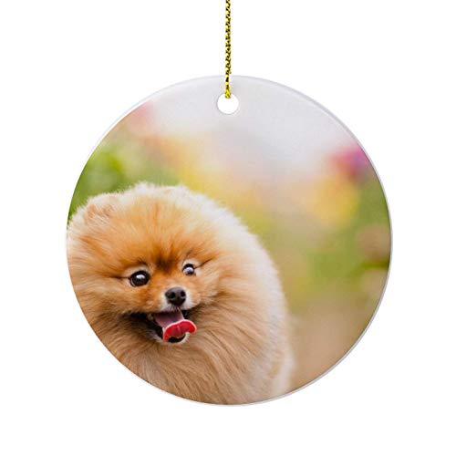 Pomeranian Puppies Ornaments for Christmas Tree,Novelty Round Porcelain Ornaments 3',Keepsake Christmas Ornaments,Farmhouse Christmas Decor,for Home