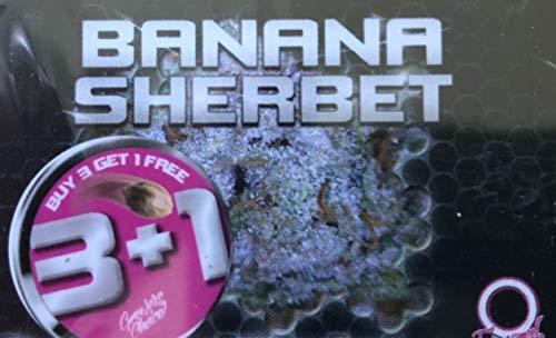 CANNA24 - 4 x Banana Sherbet Samen +...