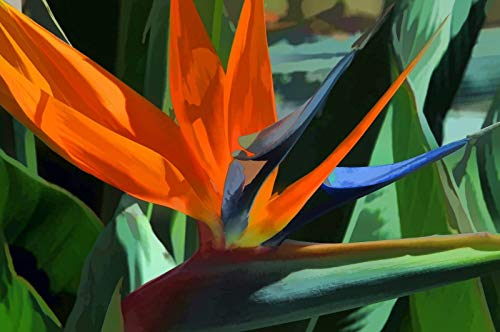 Shoopy Star Huernia schneideriana Asclepiad stapeliad Red Dragon Rare Cactus Werk 2