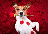 5D Diamond Painting for Adult Kit Pet Jack Russell Terrier DIY Full Diamond Cross Stitch Home Decor Handicraft Gift Embroidery 15.75 X 19.69 Inches