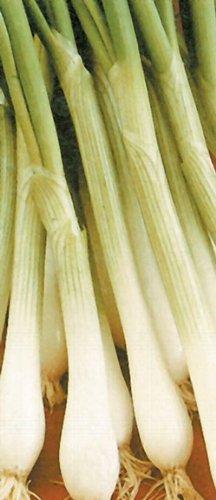 Premier Seeds Direct ORG080 Semi di cipolle bianche biologiche di Lisbona (confezione da 1500)