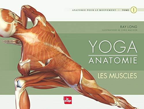 Yoga anatomie : Les muscles