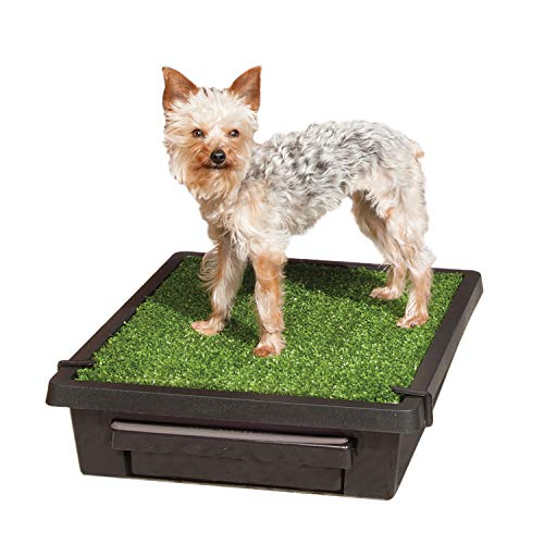 PetSafe Pet Loo Portable Dog Potty, Alternative to Pee Pads, Small