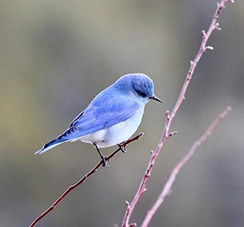 DIY olieverfschilderij digitale fotografie vogels blauw en wit