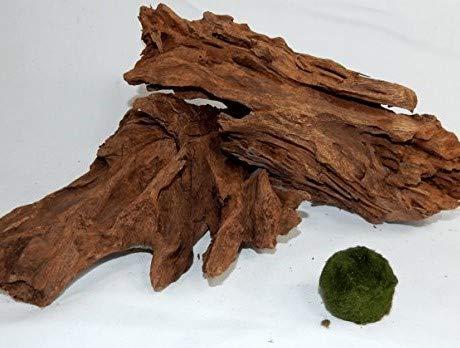 SAHAWA Wurzel,2 Mangrovenwurzeln, Mangrove, Aquariumwurzel+ Mooskugel Gratis Aquarium, Terrarium Deko ca. 20-26cm