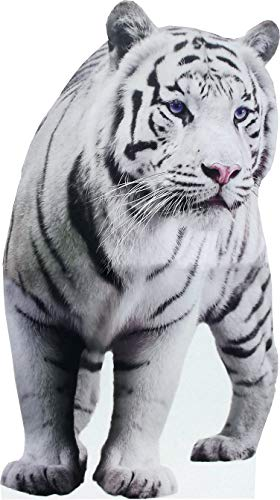 aahs!! Engraving Animal Life Size Cardboard Cutout Stand Up | Standee Picture Poster Photo Print (White Tiger)