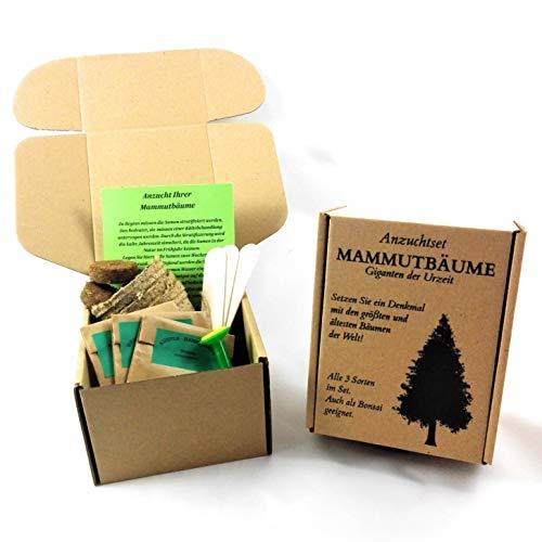ANISTA-Mammutbaum Anzuchtset. Alle drei Arten in der Geschenkbox. Bonsai geeignet.