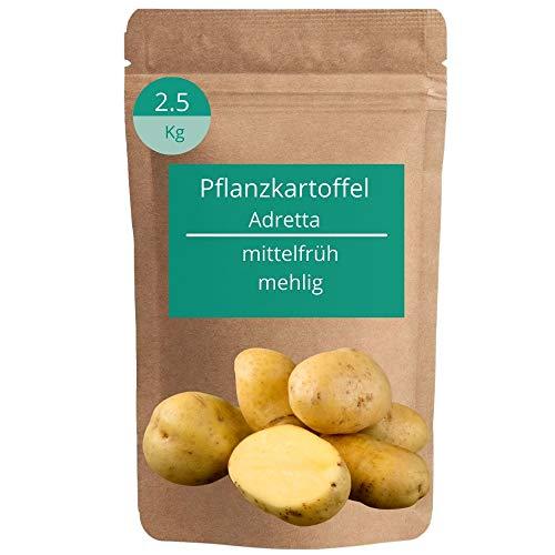 Jasker's Pflanzkartoffeln Annabelle 2,5kg festkochend | frühe Saatkartoffeln | Steckkartoffeln | fest kochend | Kartoffeln pfanzen & anbauen | Frühkartoffeln | Saatgut | Setzlinge