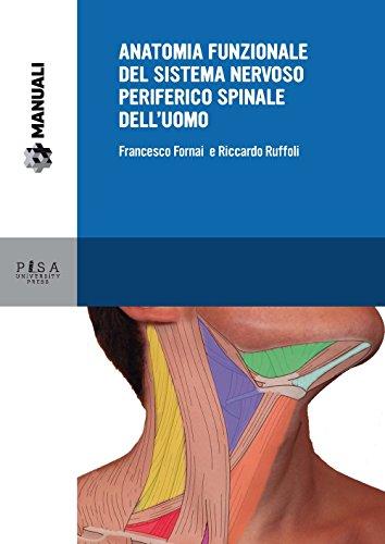 Anatomia funzionale del sistema nervoso periferico spinale dell'uomo