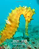 2020 - 2021 | 18 Month Weekly & Monthly Planner July 2020 to December 2021: Seahorse Marine LifeMonthly Calendar with U.S./UK/ ... in.- Economics Office Equipment & Supplies