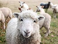 Amnogu 大人のパズル子供のための木製の1000個アートギフト家族や友人を強化するかわいい小さな羊