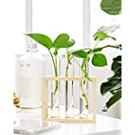 Mkono Wall Hanging Glass Planter Propagation Station Modern Flower Bud Vase in Wood Stand Rack Tabletop Terrarium for… 11 Great propagators: Prefect for propagations and cuttings! Propagates your plant's babies in style, slim glass container provides plenty of room for plant's roots and all are visible for observing its growth condition. Minimalistic Look: A wood rack in Natural Retro Color combined with 3 clear glass tubes. A beautiful way to display the artificial or freshly cut flowers, mixed bouquets and water rooted plants for home decor in livingroom, bedroom, restroom, dinning room, kitchen, or office. Functional Item: Simple look is suitable for most of plants, likes Scindapsus, Pothos vine, African violets, Lucky Bamboo, even for Herbs. Wall mountable or desktop stand for different ways of showing. Make a great gift for the plant-lover in your life.
