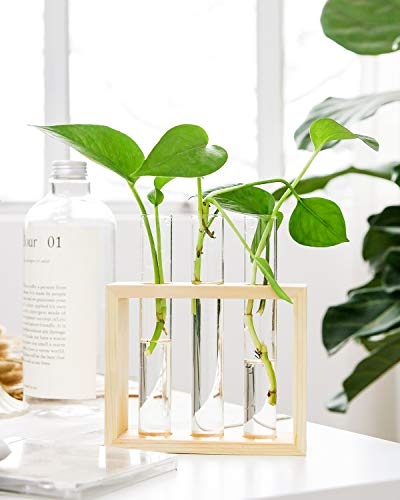 Mkono Wall Hanging Glass Planter Propagation Station Modern Flower Bud Vase in Wood Stand Rack Tabletop Terrarium for… 3 Great propagators: Prefect for propagations and cuttings! Propagates your plant's babies in style, slim glass container provides plenty of room for plant's roots and all are visible for observing its growth condition. Minimalistic Look: A wood rack in Natural Retro Color combined with 3 clear glass tubes. A beautiful way to display the artificial or freshly cut flowers, mixed bouquets and water rooted plants for home decor in livingroom, bedroom, restroom, dinning room, kitchen, or office. Functional Item: Simple look is suitable for most of plants, likes Scindapsus, Pothos vine, African violets, Lucky Bamboo, even for Herbs. Wall mountable or desktop stand for different ways of showing. Make a great gift for the plant-lover in your life.