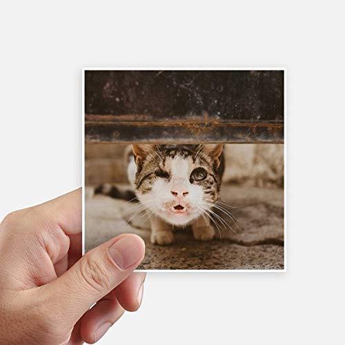 DIYthinker Photo Funny Animal Cat Pousse Autocollant carré de 10 cm Mur Valise pour Ordinateur Portable Motobike Decal 8Pcs 10cm x 10cm Multicolor
