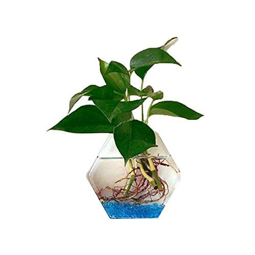 GerFogoo Vase en verre en m/étal pour plantes hydroponiques Transparent Terrariums Pot de fleurs Bureau Fleur Bourgeons Pot de fleurs Vase Maison Bureau D/écoration de mariage Champagne Dor/é S