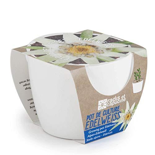 Pot céramique blanc 8 cm Edelweiss