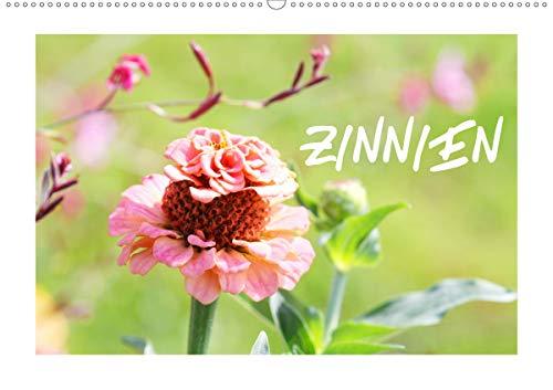 ZINNIEN (Wandkalender 2021 DIN A2 quer)
