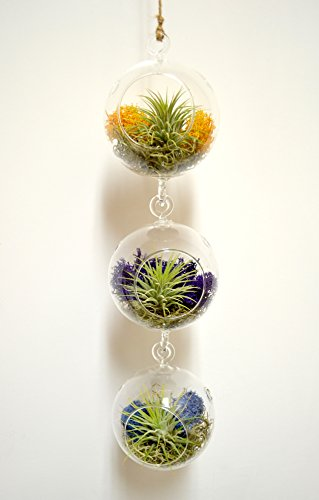 Hanging glass terrarium for three