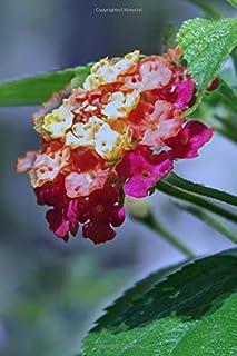 Notebook: Lantana Flower First May Flower Spring Flora Summer Bloom