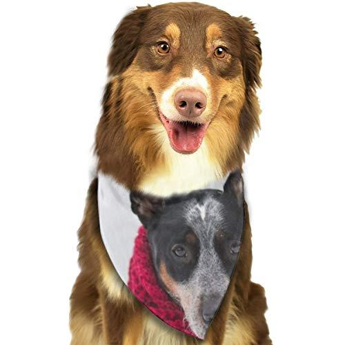 N/B Bbgsw hond dragen gehaakte sjaal met pony terwijl zitten op sneeuw aangepaste hond hoofddoek felgekleurde sjaals schattige driehoek slabbetjes accessoires voor huisdier honden