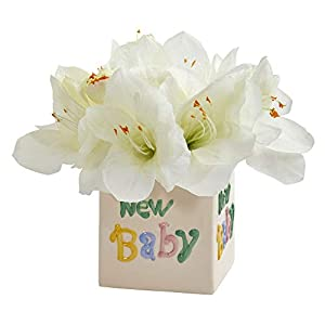 Nearly Natural 12in. Amaryllis Artificial New Baby Vase Silk Arrangements, White
