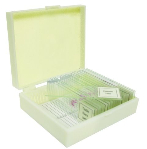 Vision Scientific VSE117 Prepared Slide Set – Water Life (Set of 12)