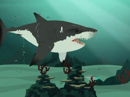 Stuck on Sharks Categories Featured for Genre TV