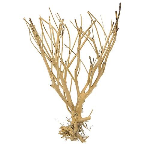 LUOXUEFEI Aquarium Moosbaum Für Aquarium Ornament Landschaft Bonsai Dekoration