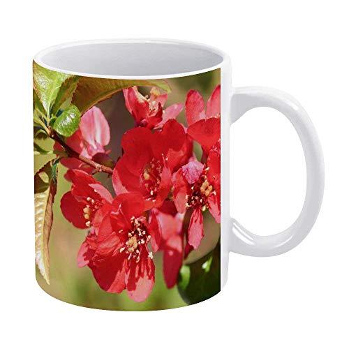 N\A Tazas de café Blanco de 11 onzas, Taza de Chocolate de cerámica con pétalos Vermeil para Mujer, Jefe, Amigo, Empleado o cónyuge
