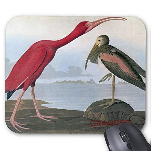 Mauspad mit seidenweicher Textiloberfl?che - Mouse Pad Paradise (antistatische Wirkung - perfekte Gleiteigenschaft PC / Computer Mousepad)-audubon scarlet ibis