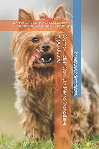Cómo Lidiar Con Un Perro Yorkshire Hiperactivo: Qué Hacer Si Tu Yorkshire Se Orina, Destroza, Muerde, Ladra, Salta, Gruñe o Tira Correa