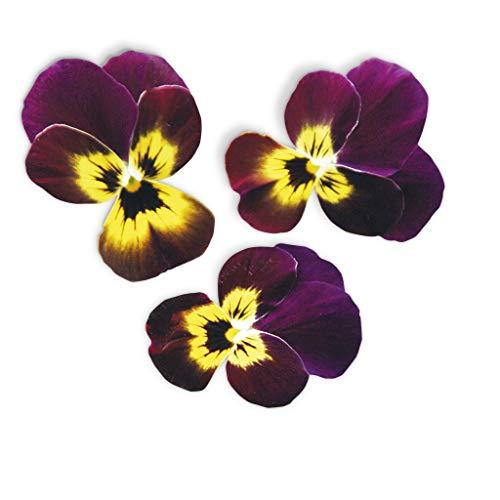 Kapsel lila Rubin und Gold Plantui - Packung mit 3 Stück