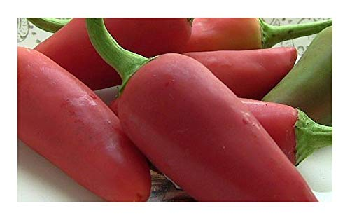 Fresno Chili - piment - 50 graines