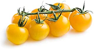Premium Tomato Cherry Yellow Holland | Mild & Sweet Flavor | Tender Firm & Thin Skin | Tangy & Savory | Full Of Juicy | Pr...