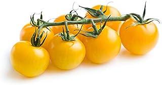 Premium Tomato Cherry Yellow Holland | Mild & Sweet Flavor | Tender Firm & Thin Skin | Tangy & Savory | Full Of Juicy | Pr...