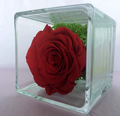 Rubis-Rose Rosa Rossa eterna sotto Vetro e Cube di Vetro, Rosa Naturale stabilizzata e Foglie di Rosa stabilizzate, Prodotto di Alta Gamma