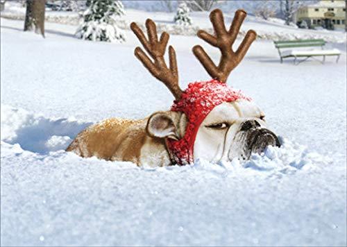 Bulldog Reindeer Avanti Funny/Humorous Dog Christmas Card