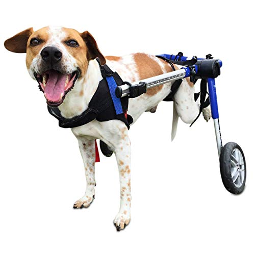 Walkin' Wheels Dog Wheelchair - for Medium Dogs 26-49 Pounds - Veterinarian Approved - Dog Wheelchair for Back Legs