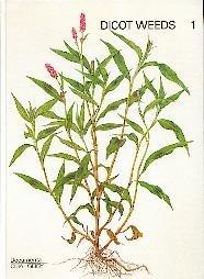 Dicot Weeds 1. Zweikeimblättrige Unkräuter aus 13 Familien.
