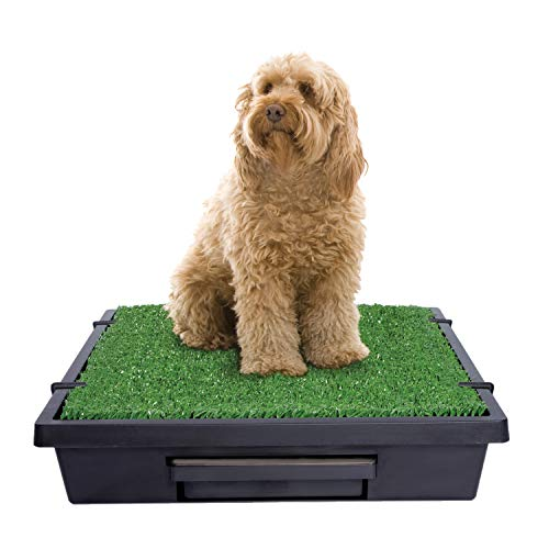 PetSafe Pet Loo Portable Dog Potty, Alternative to Puppy Pads, Medium
